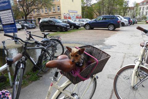 Stadtführung Dresden mit Haustier