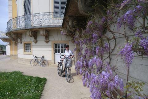 Blüten und Blumen in Pillnitz